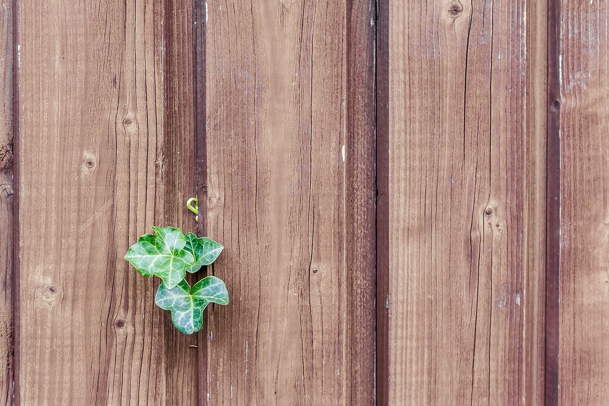 The True Cost of Wooden Fence Panels