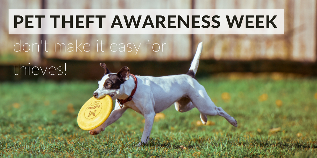 Copy of PET THEFT AWARENESS WEEK