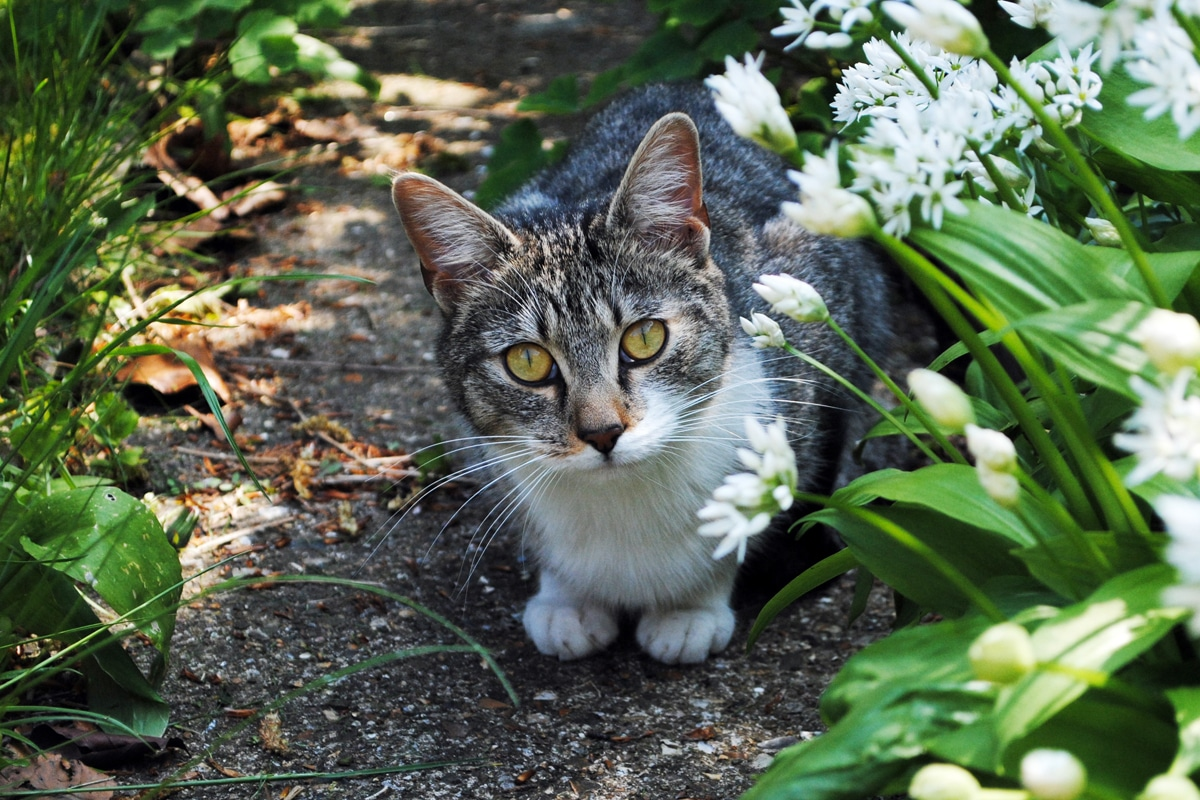 6 Ways To Make Your Garden Pet Friendly.