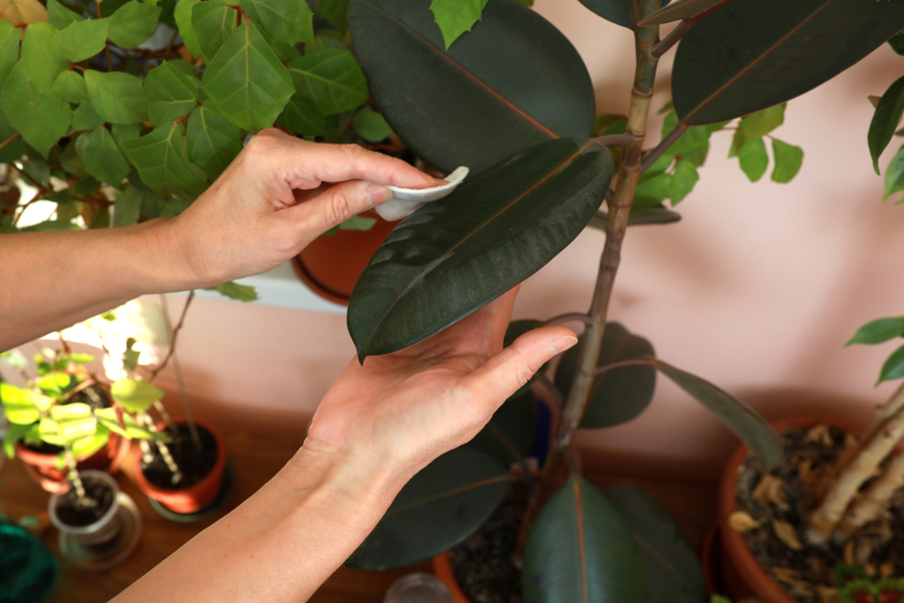How Not to Kill a Houseplant in 6 Easy Steps