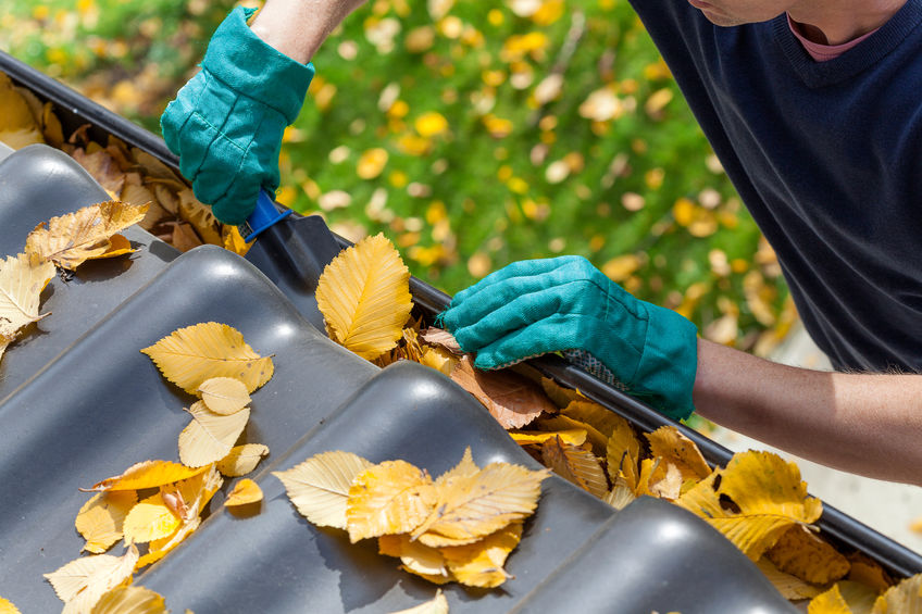 Man clearing out autumn garden leaves from gutter