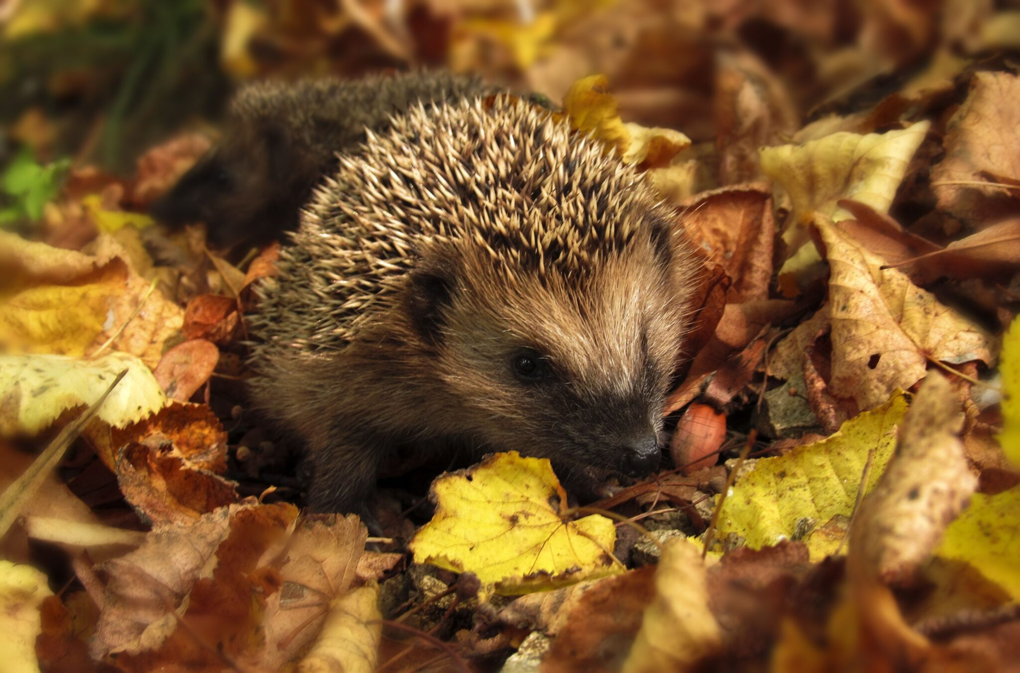 What to do in your Autumn Garden this weekend